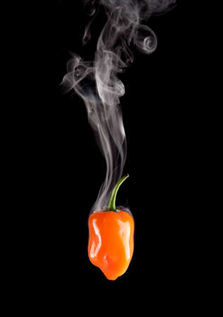 Smoking Hot Orange Habanero Pepper (Capsicum Chinense) 版權商用圖片 - 11267047