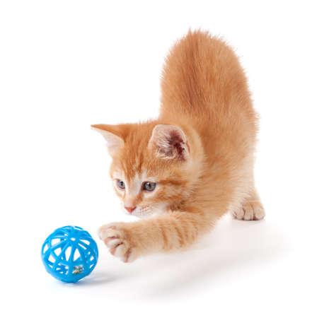 gato jugando: Lindo gatito de color naranja con las patas grandes, jugando con un juguete