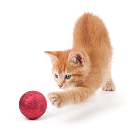 CAT TOY: Cute orange kitten playing with a red Christmas ball ornament on a white background
