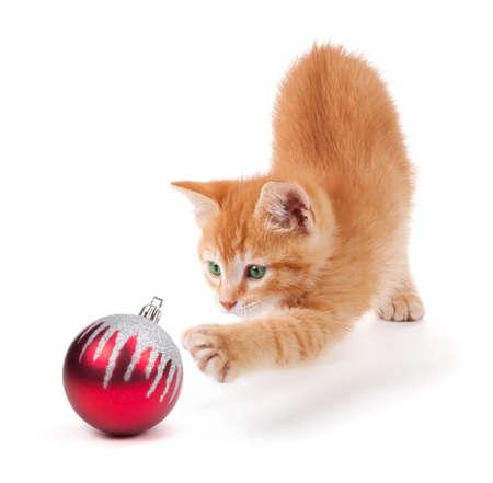 Leuk oranje katje spelen met een rode kerst bal ornament op een witte achtergrond