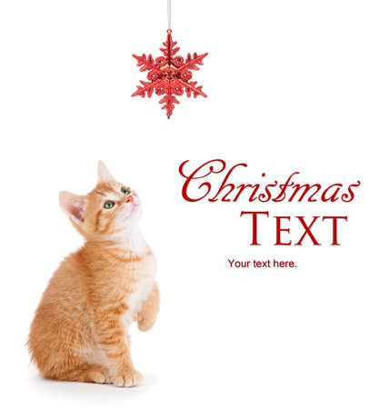 Cute orange kitten playing with a red Christmas snowflake ornament on a white background  Stock Photo - 16634981
