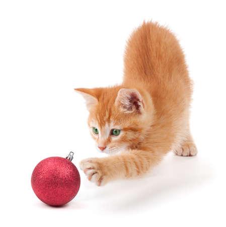 gato jugando: Anaranjado lindo gatito jugando con una bola de adorno de Navidad rojo sobre un fondo blanco