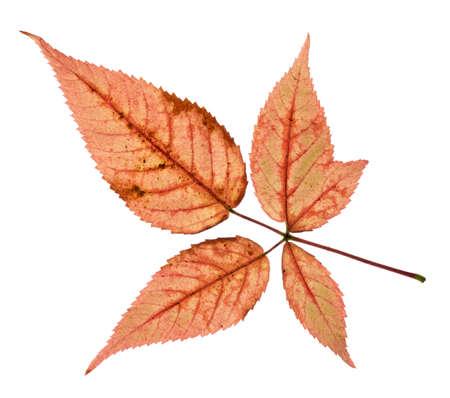 Kleurrijke Fall leaves geïsoleerd op wit