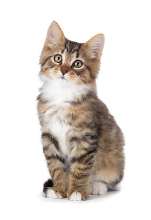 sad eyes: Cute tabby kitten isolated on white