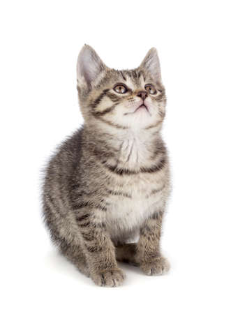 Cute striped kitten isolated on white