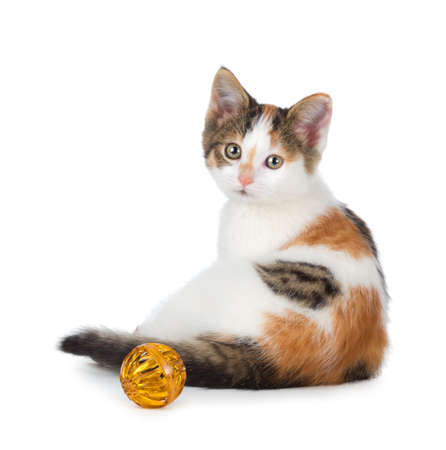 Cute calico kitten sitting next to a toy isolated on white  photo