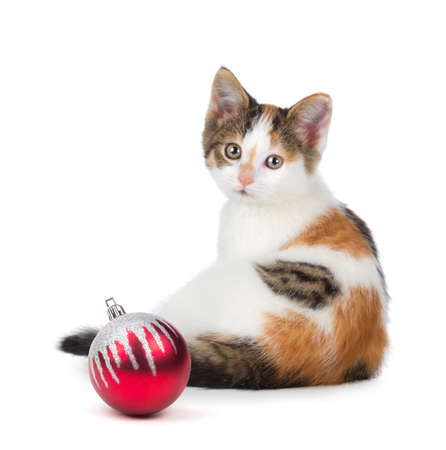 Cute calico kitten sitting next to a Christmas Ornament islolated on a white background  Stock Photo