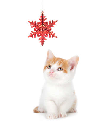 play card: Cute orange and white kitten playing with a red Christmas snowflake ornament on a white  Stock Photo