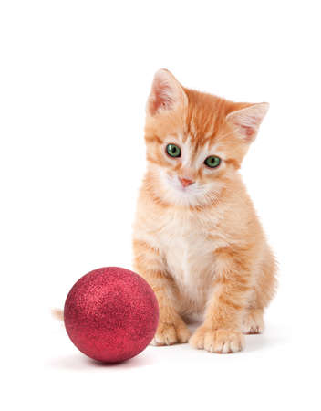 Cute orange kitten with large paws sitting next to a Christmas Ornament islolated on a white background