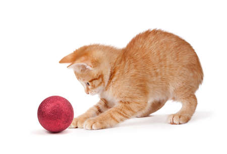 Cute orange kitten playing with a red Christmas ball ornament isolated on a white background