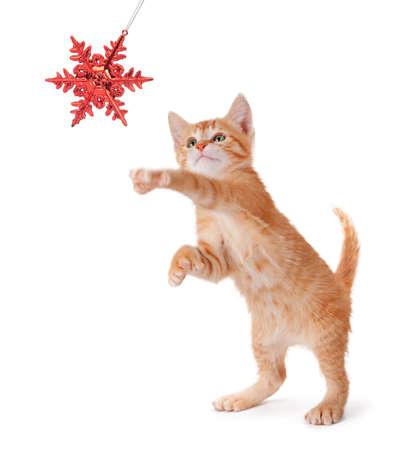 Leuk oranje katje spelen met een rode kerst sneeuwvlok ornament op een witte achtergrond Stockfoto