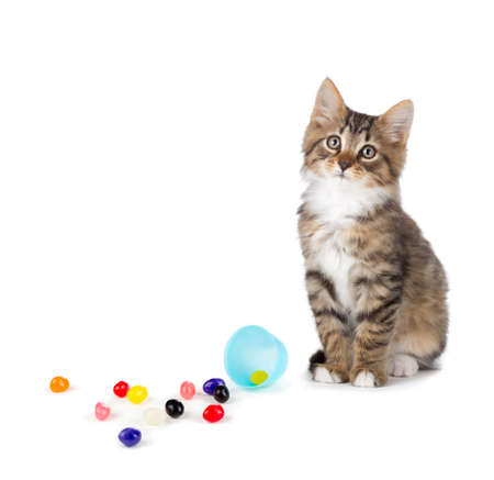 humor: Cute tabby kitten sitting next to jelly beans spilled out of an Easter egg isolated on a white background