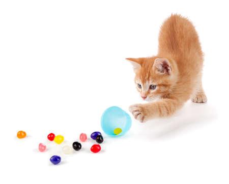 Leuke Oranje Kitten morsen kleurrijke jelly beans uit een plastic paasei geïsoleerd op een witte achtergrond Stockfoto