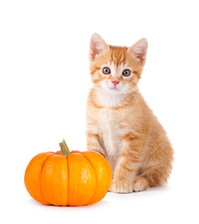 Cute orange kitten with a mini pumpkin isolated on white background