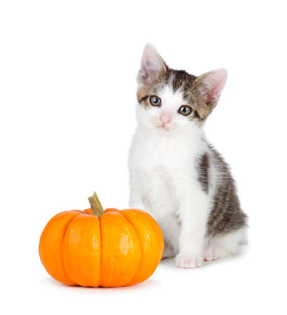 Cute kitten with a mini pumpkin isolated on a white background. 写真素材
