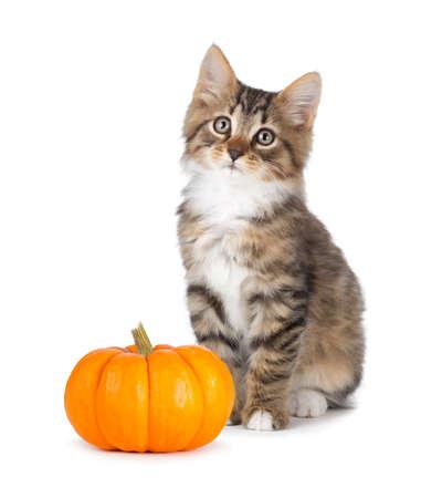 Leuk katje met een mini pompoen geïsoleerd op een witte achtergrond. Stockfoto