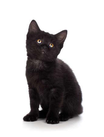ojos negros: Lindo gatito negro aislado en un fondo blanco