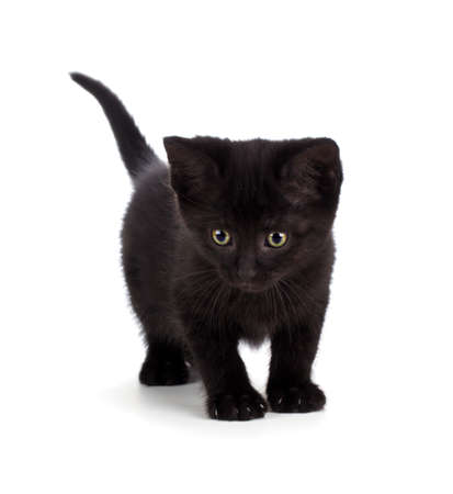 Scary black kitten with green eyes isolated on white.
