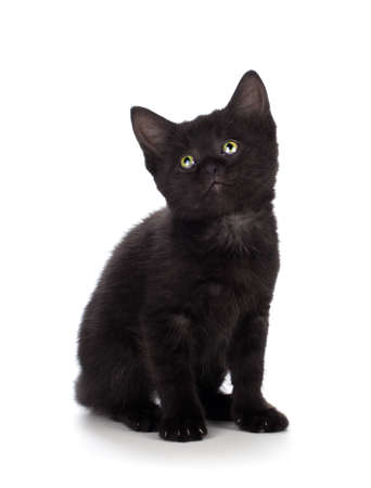 cats playing: Scary black kitten with green eyes isolated on white.