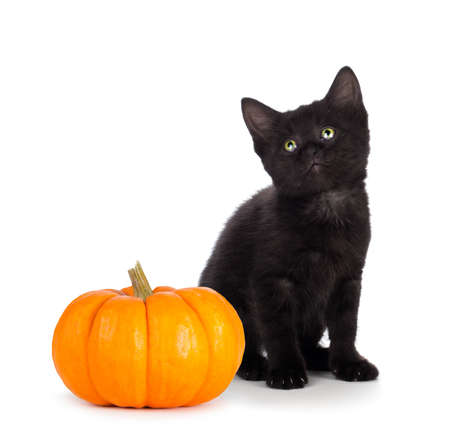 Cute black kitten with green eyes sitting next to a mini pumpkin isolated on white background.