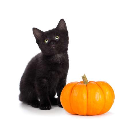 Leuk zwart katje met groene ogen zit naast een mini pompoen geïsoleerd op een witte achtergrond. Stockfoto