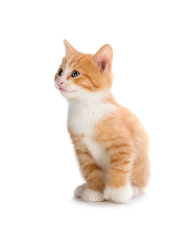 Cute orange kitten looking up isolated on white.