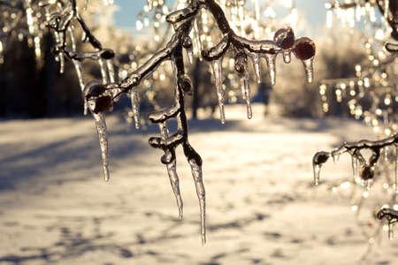 極端な icestorm 後木のつらら。