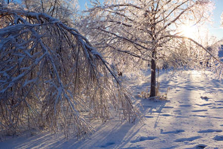 Ice coated trees damaged from an extreme icestorm.