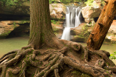 exposed: Exposed tree roots in front of Upper Falls at Hocking Hills State Park, Ohio. Stock Photo