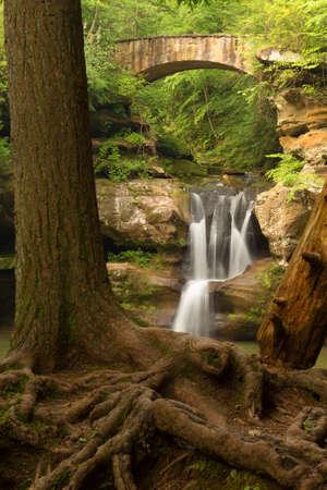 ホッキング ヒルズ州立公園、オハイオ州の上の滝の前に露出した木の根。