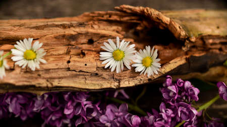 An old fallen tree with flowers