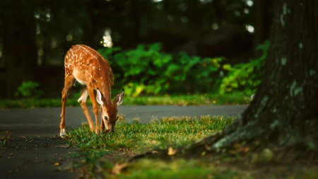 A little deer wandering in the forest Stock Photo