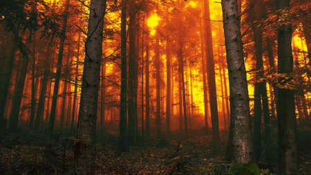 A cool looking forest in fire Archivio Fotografico