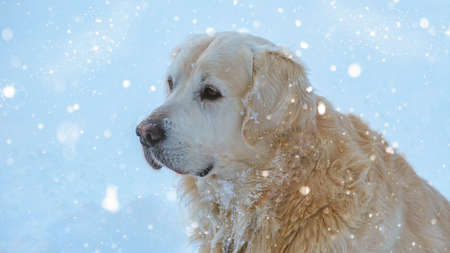 snowing: Snowing on a cute dog