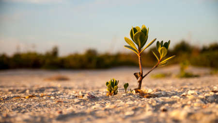 massage symbol: Plant closeup sand