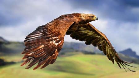 Hawk in flyght