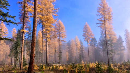 Fog in the forest on clear sky Stock Photo
