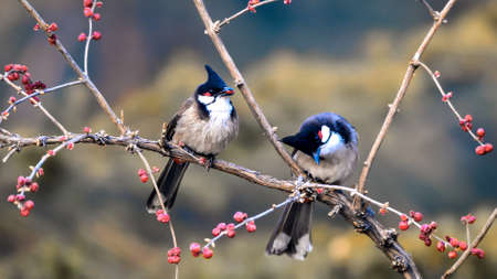 Two birds on branch Stock Photo