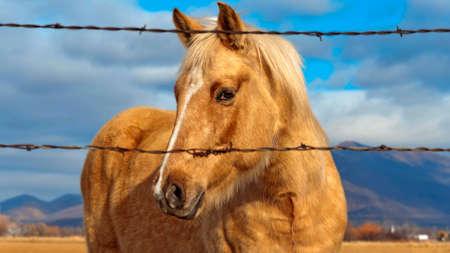 Nice closeup to a horse Stock Photo