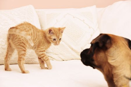 Cat laying with dog on a sofa Stock Photo