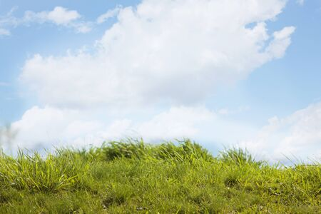 Beautiful fresh green grass and blue sky with white clouds on sunny summer day