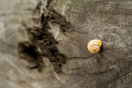 snail in wood