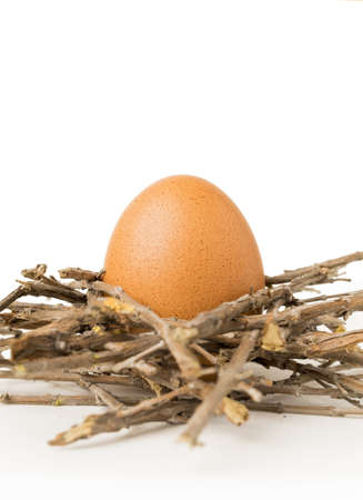Brown egg in nest
