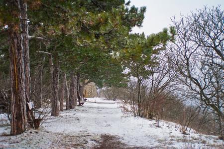 frozen trees: Frozen trees