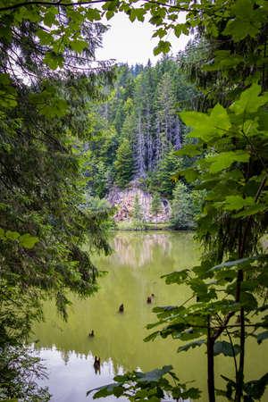 Red Lake (also known as Lake GhilcoÅŸ) is a natural dam lake in Harghita County, Romania Foto de archivo