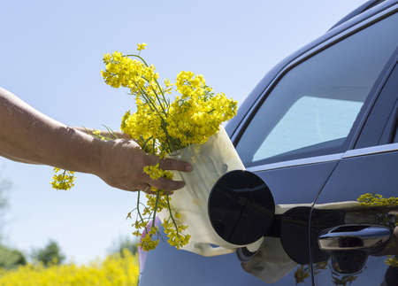gas can: Conceptual image, refueling a black car with rapeseeds.