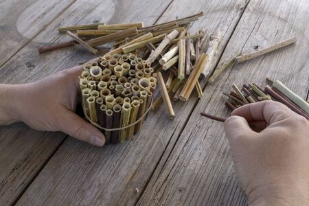 Do it yourself insect hotel made from hollow plant stalks Reklamní fotografie