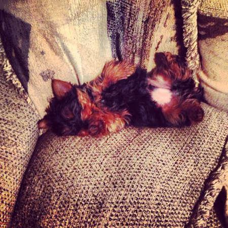 otganimalpets01: Sleepy puppy  Stock Photo