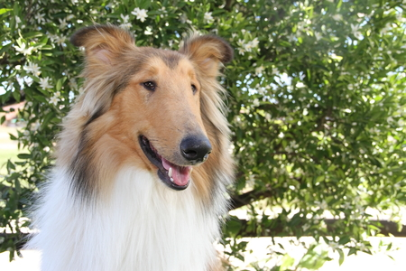 puppy collie on the beach pet friendly