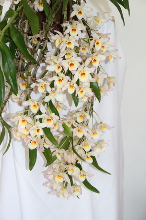 parasitic bromeliads parasitic plants bloomed in spring Zdjęcie Seryjne